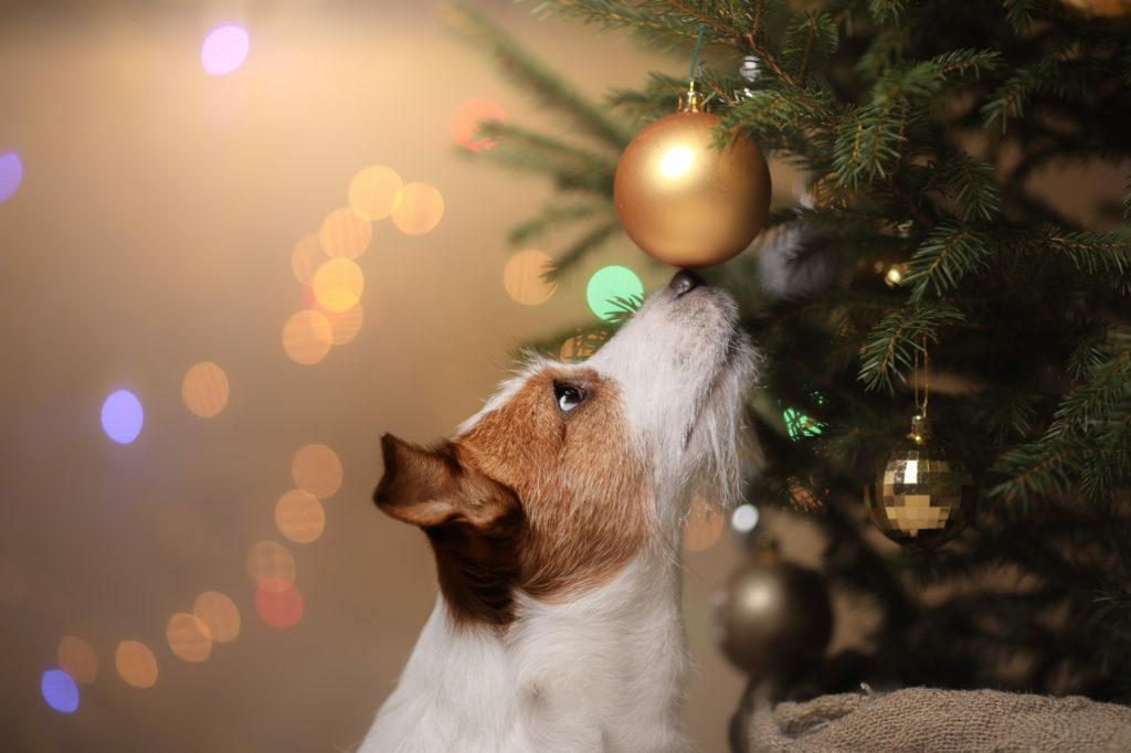 Peas a vianočni stromček
