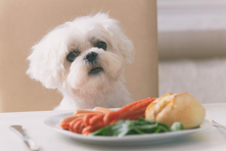 pes zelenina