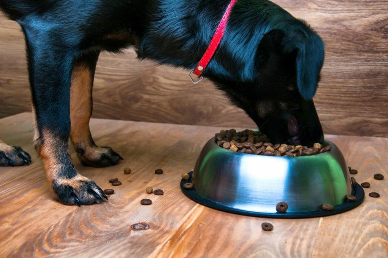 pes a krmivo