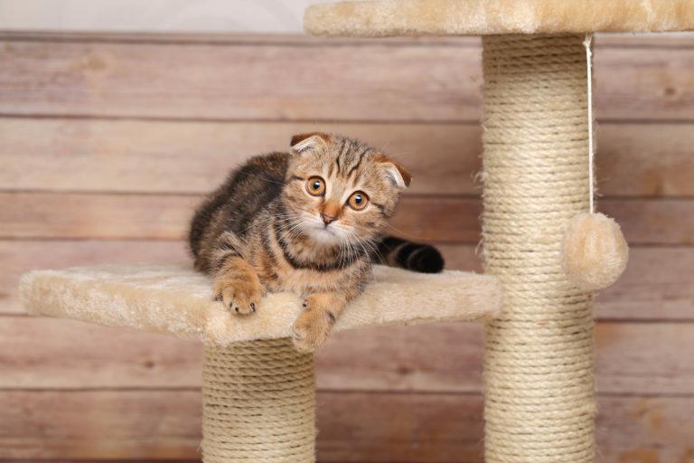 mačka na škrabadle