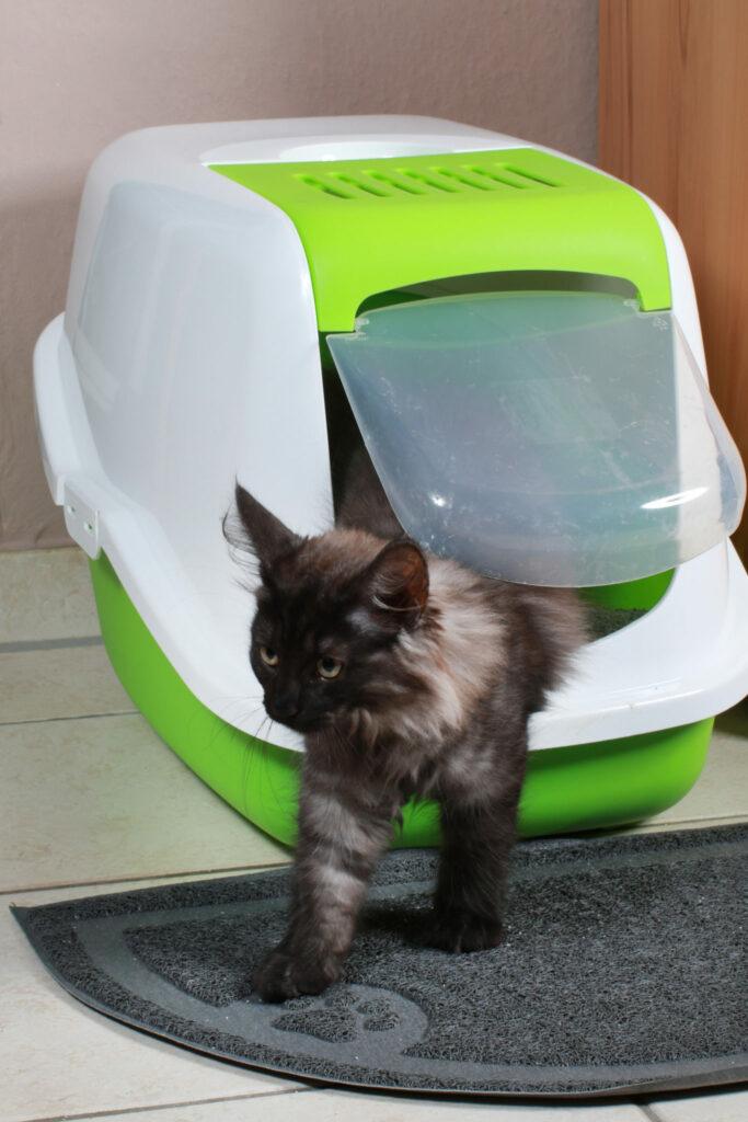 mačka a krytá toaleta
