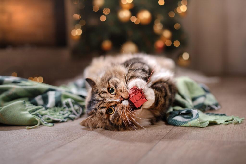 mačka vianočni darček