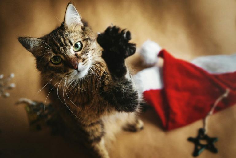 mačka Vianoce