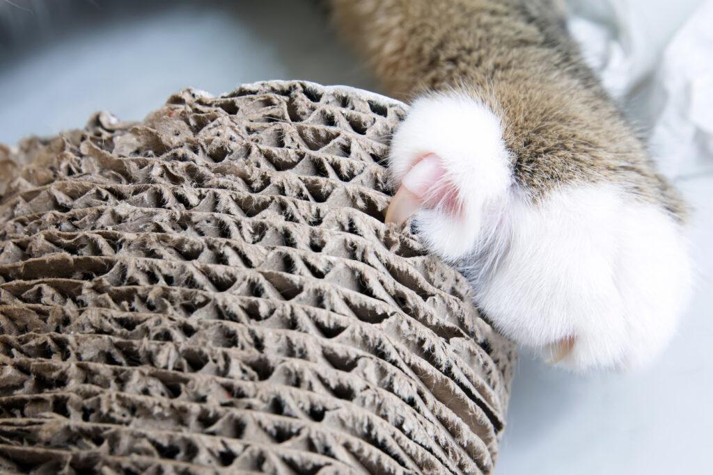 mačka pazúriky