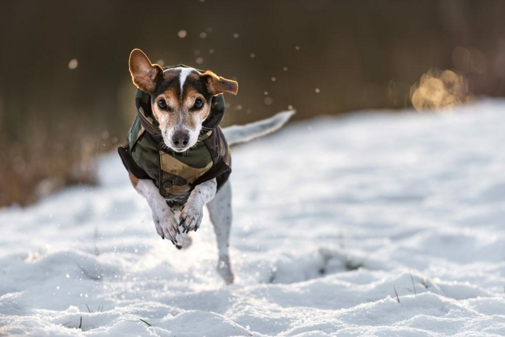 Pes šťastný na snehu