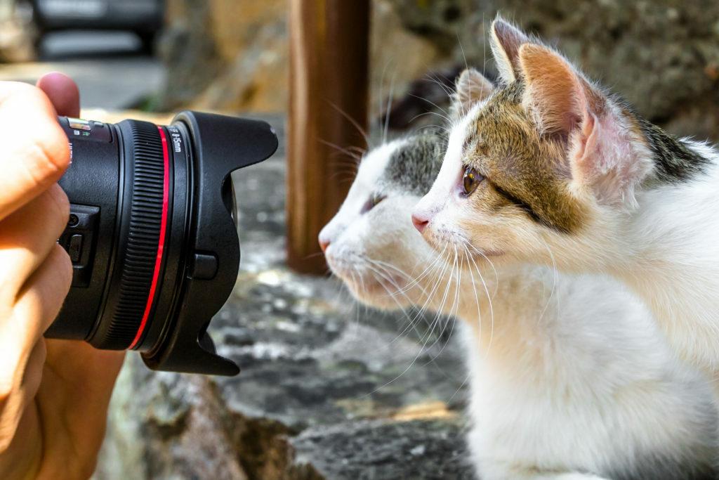 Fotografovanie dvoch mačiek