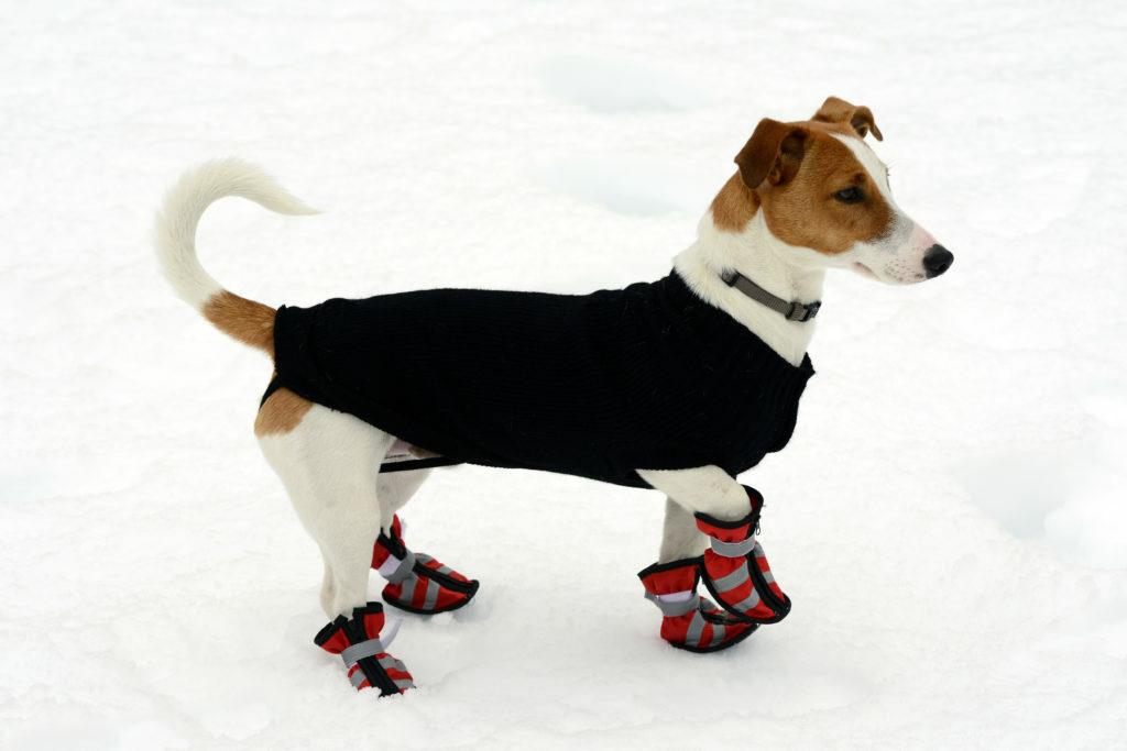 pes na snehu s kabátom a topánkami