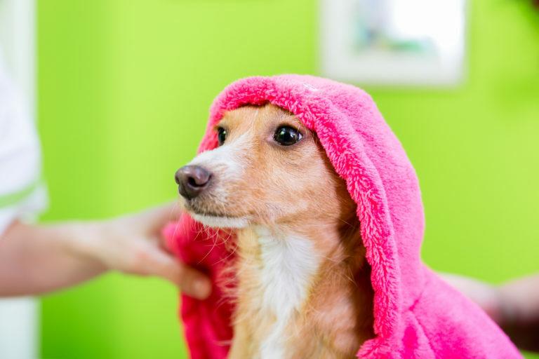 pes pod uterákom