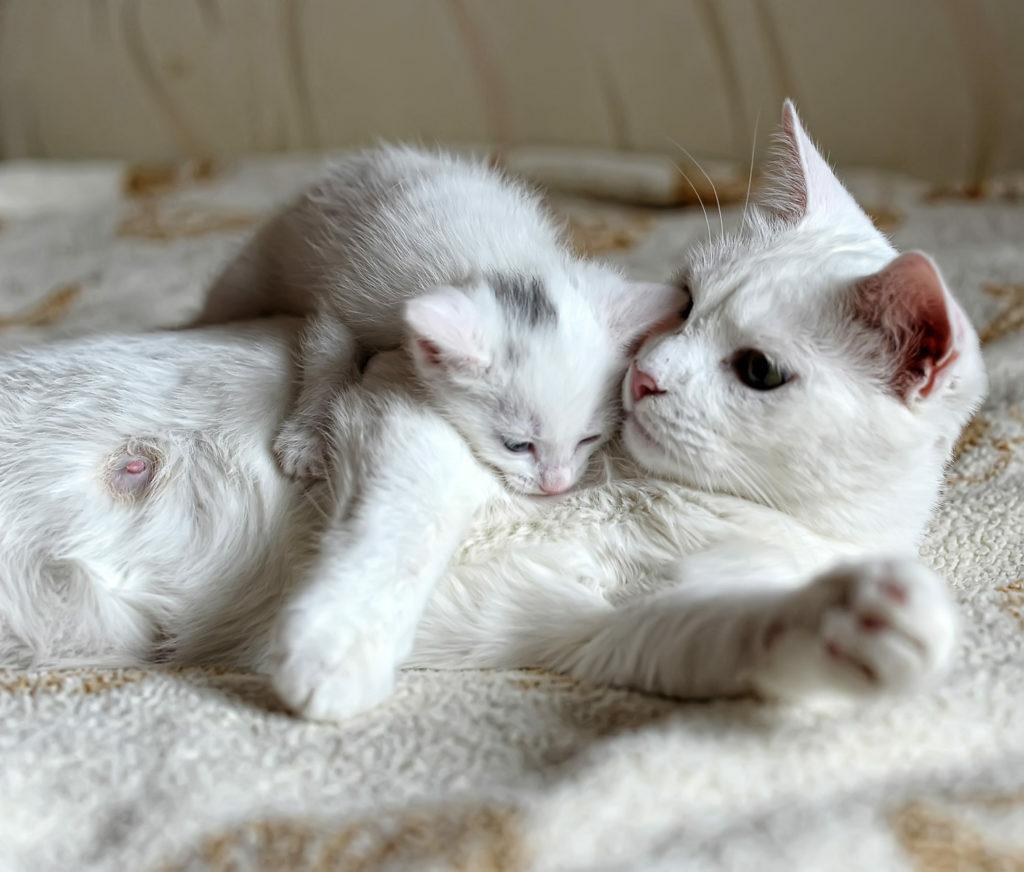mačiatko s mamou