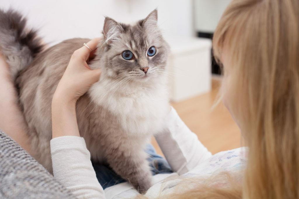 Mladá žena s ragdoll mačkou