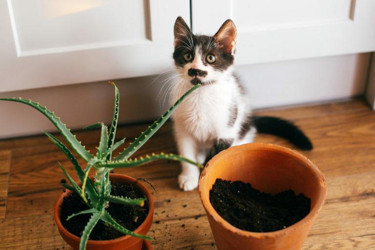 čiernobiela mačka a kvetináče