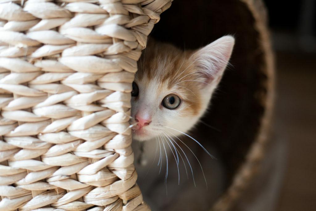 mačiatko ukryté v koši