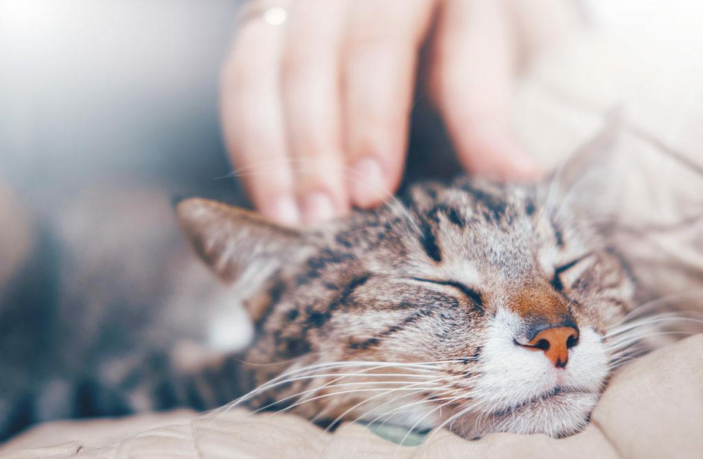 hladeni mačky