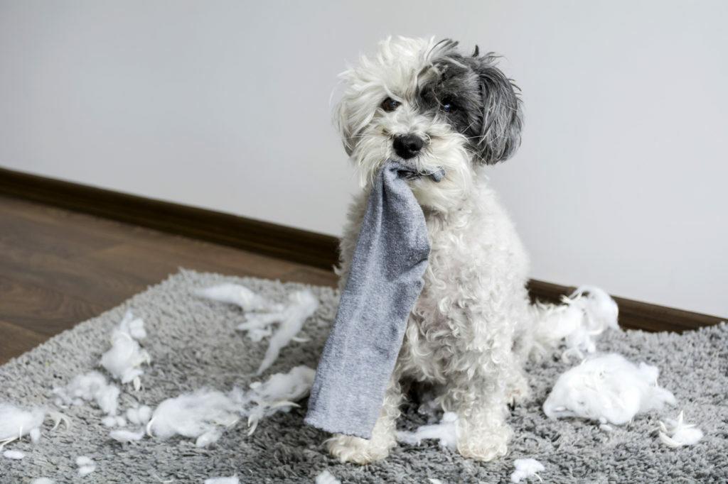 pes ničí všetko