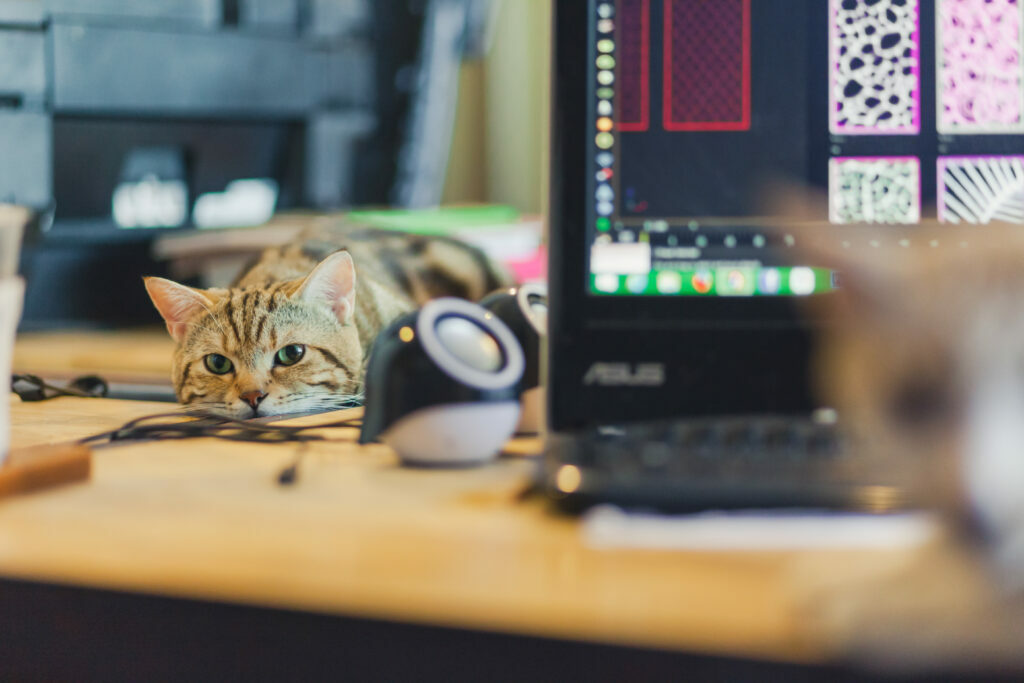 práca s mačkou doma