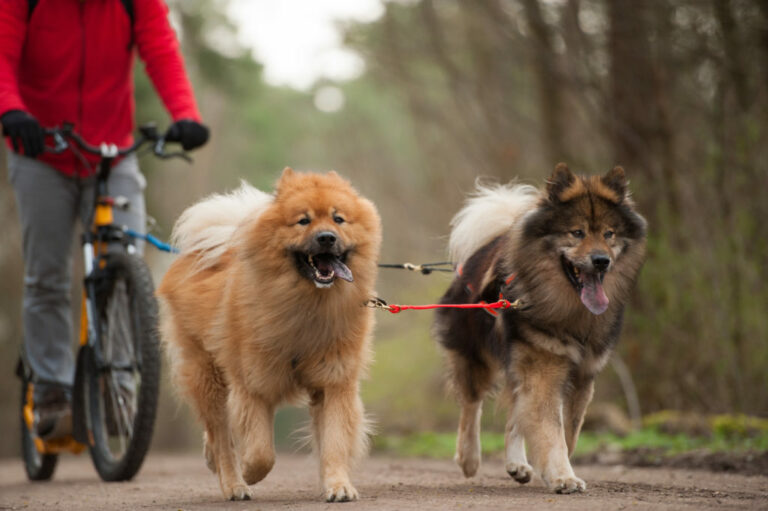 bicykel a psy