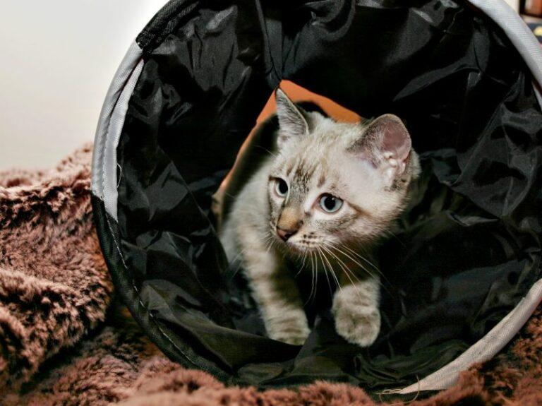 mačka v tunelu