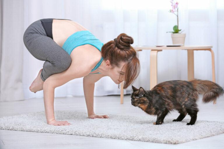 žena robí jogu s mačkou