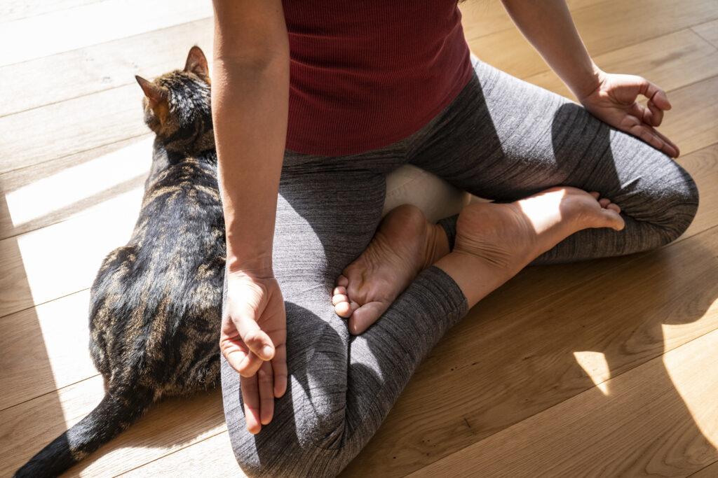 meditácia s mačkou