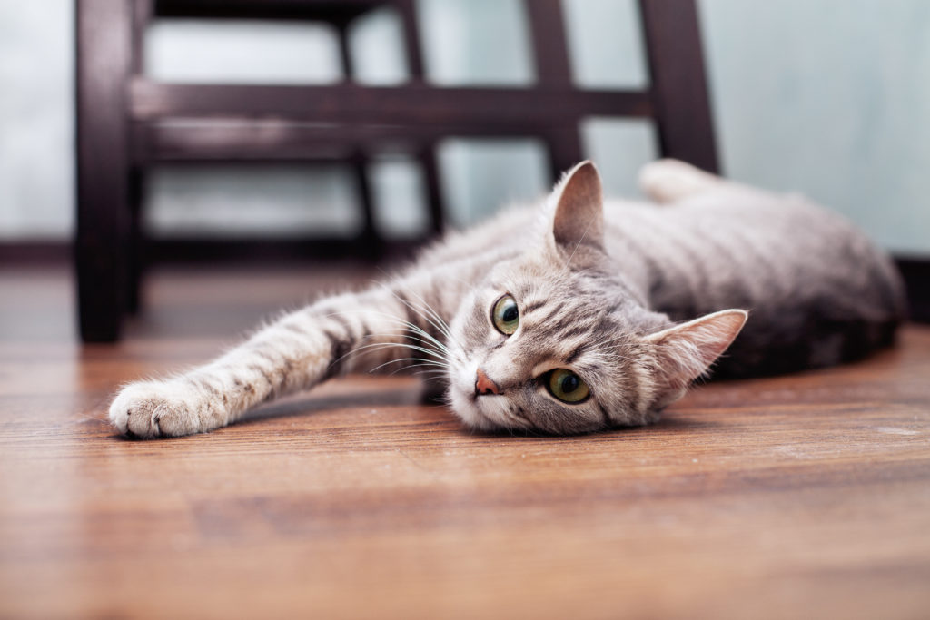 Mačka ležiaca na podlahe