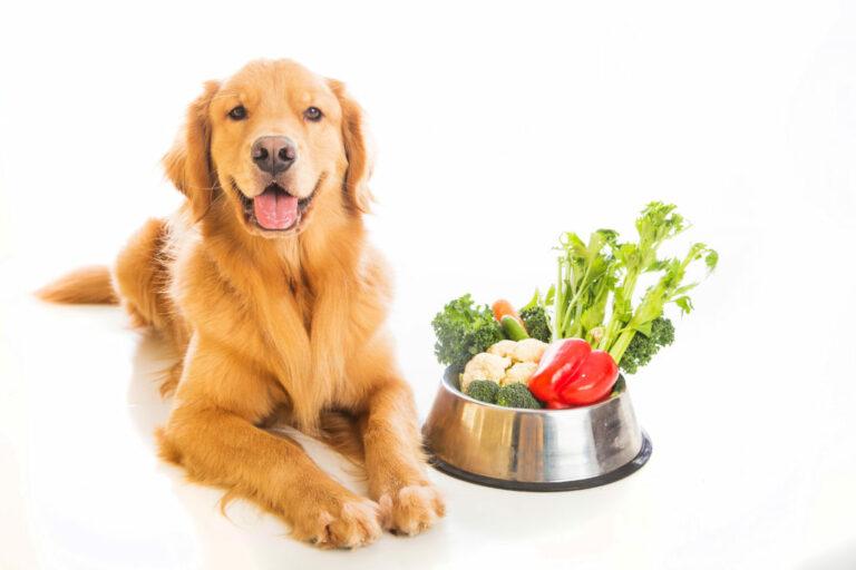 Vegetariánske krmivo pre psov Zlatý retriever