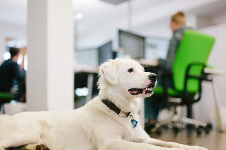 pes v kancelarii