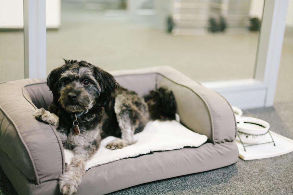 pes v kancelarii v pelechu