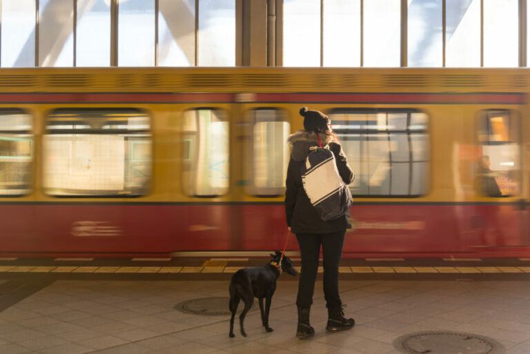 pes na vlakovej stanici