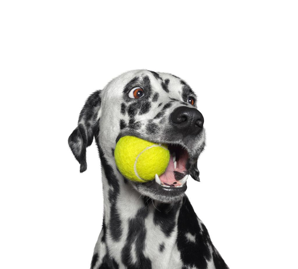 pes s hračkou