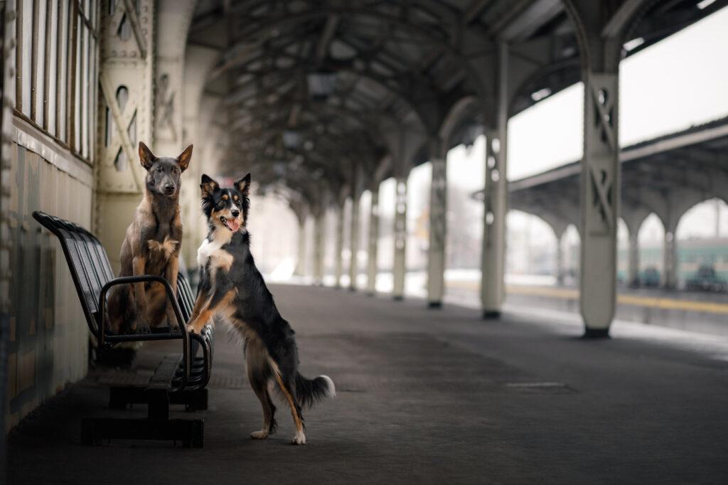 psy na vlakovej stanici