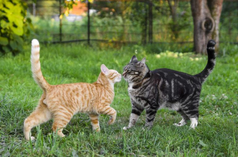 Dve mačky sa hrajú na záhrade