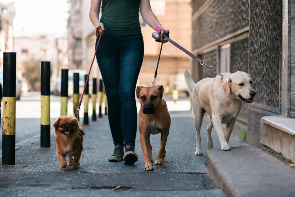 žena so psami na prechádzke