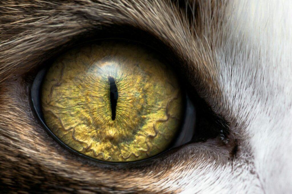 zblízka mačacie oko