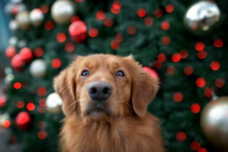 Pes a vianočný stromček