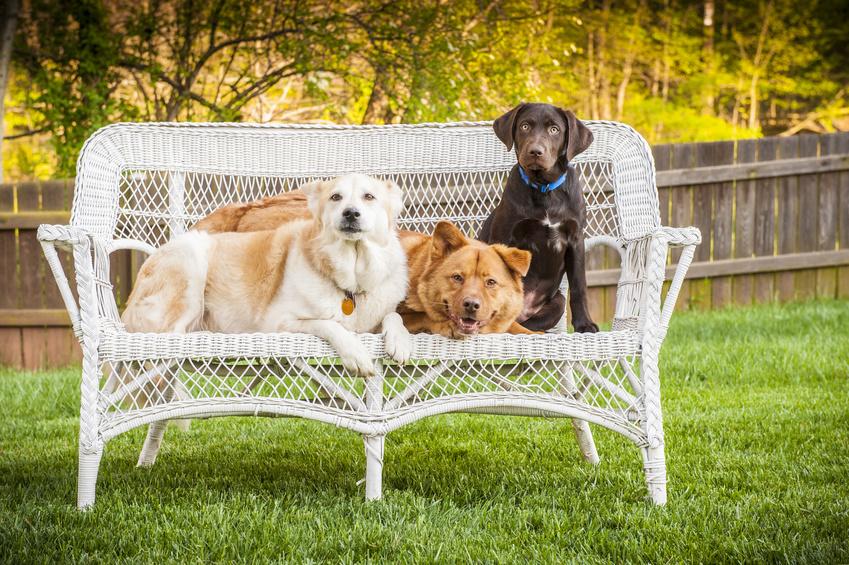 Chov viacerých psov