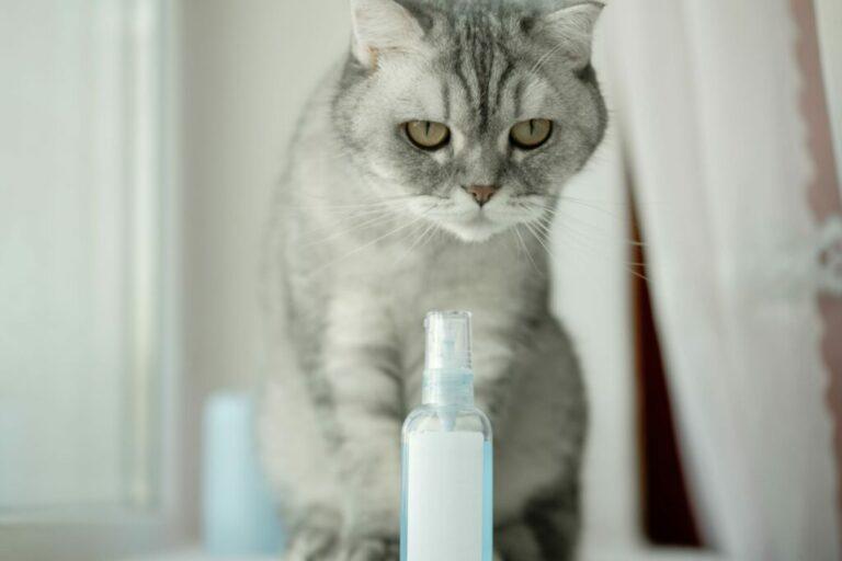 mačka sedí pred feromónovou fľašou