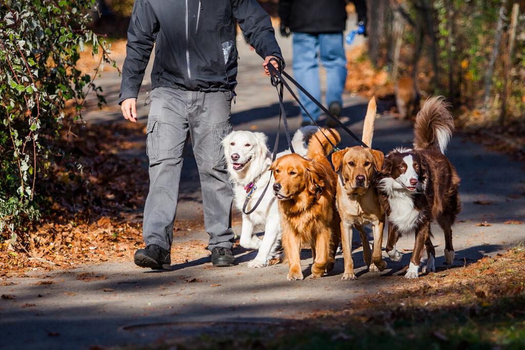 psy na prechádzke