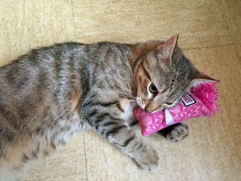 mačka a hračka