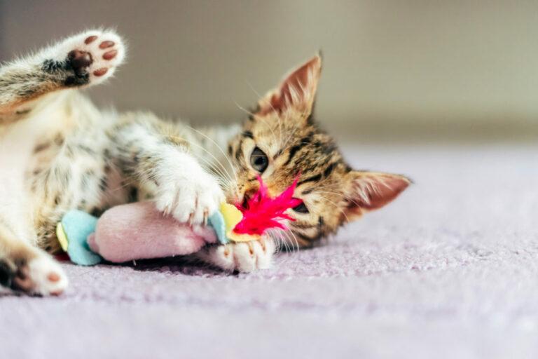 mačka s hračkou