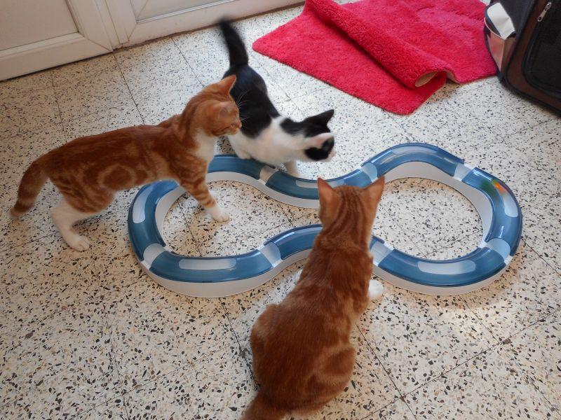 mačky a hračka dráha