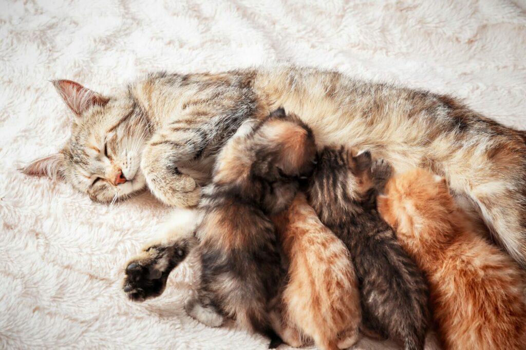 matka mačka cicia mačiatko