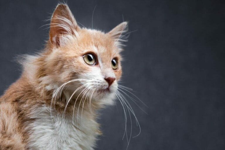 Mačacie zmysly