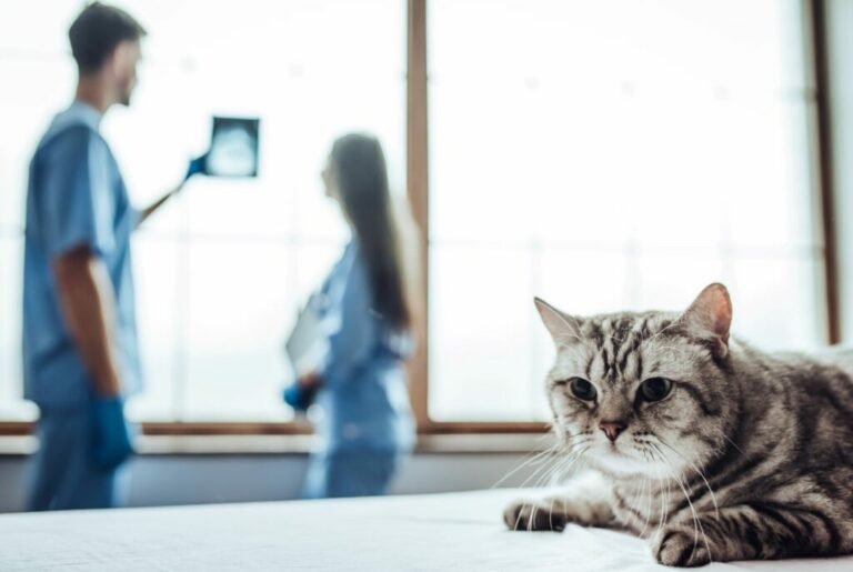mačka u veterinára