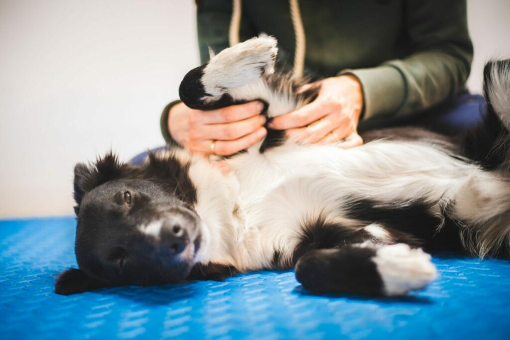 pes u veterinára