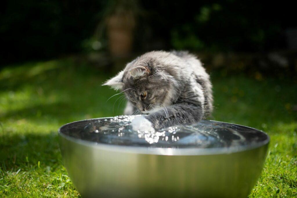 Mačka sa hrá s vodou