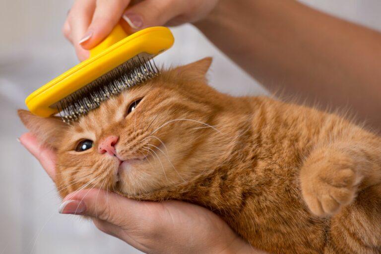 kefovanie mačky