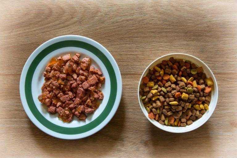 suché a mokré krmivo pre mačku
