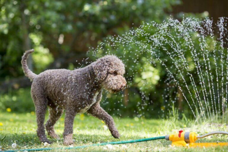 záhradný postrekovač pre psov